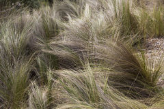 Winter Grass Royalty Free Stock Photos