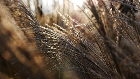 Winter grass. In the sunlight Royalty Free Stock Photography