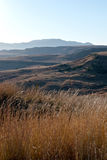Winter Grasses and Dry Landscape in Orange Free State Royalty Free Stock Photo