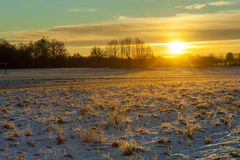 Winter grasses at sunrise. Trees and sun in the background Stock Image