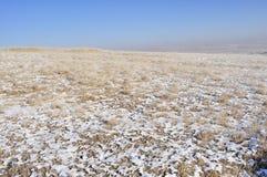 Winter grassland in inner mongolia Royalty Free Stock Photo