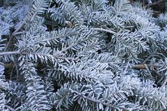 Frosty winter greens Royalty Free Stock Photography