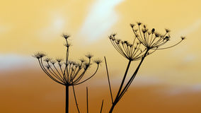 Winter cress  silhouettes Royalty Free Stock Photos