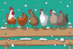 Winter group chicken snow and sky. Royalty Free Stock Images