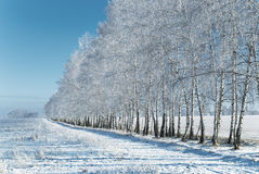 Winter grove Royalty Free Stock Photos