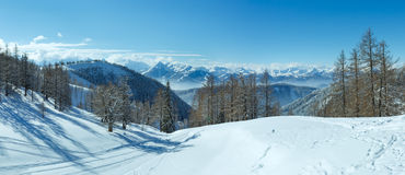 Winter grove near Dachstein mountain massif Stock Photography