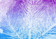 Winter grunge background. Winter pine tree grunge background Royalty Free Stock Photos