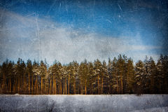 Winter grunge background (pines) Stock Photography