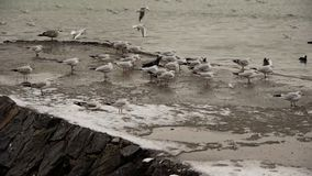 Winter harbour scene with flock of gulls stock footage