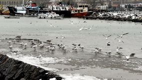 Winter harbour scene with gulls stock video footage