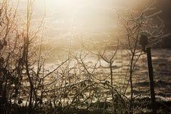 Winter harkend, beleuchten Sie auf gefrorenem Zaun und Wiesen stockfotografie