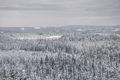 Winter in Harz Royalty Free Stock Photos
