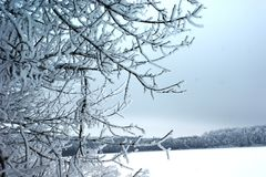 A winter has stylish and restrained combinations of colors. Nature in winter does not have a disorderly conduct of paints. Her colors limit. But this restraint Stock Image