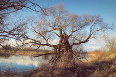 Winter at Havel river in Havelland Brandenburg Germany Royalty Free Stock Image