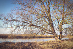 Winter at Havel river in Havelland Brandenburg Germany Royalty Free Stock Images
