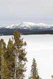 Winter, Hayden Valley, Yellowstone NP Royalty Free Stock Images
