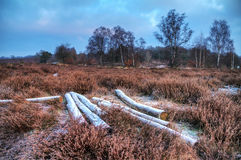 Winter heathland Stock Image