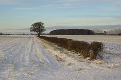 Winter hedgerow Royalty Free Stock Photography