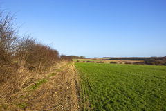Winter hedgerow and wheat Royalty Free Stock Photography