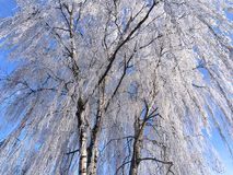 Winter in the Herning,Denmark. As background.Scandinavia`s travel destination Royalty Free Stock Images