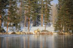 Winter hielo Forest Reflection del lago al aire libre Foto de archivo