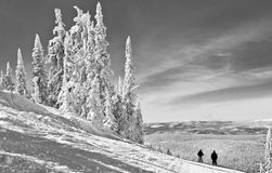 Winter in the High Mountains. A monochrome image of winter in the high mountains with snow frosted evergreen trees Stock Photo