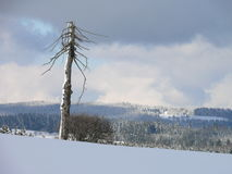 Winter in Highland. Winter scene in czech republic Stock Photography