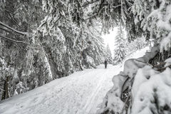 Winter hike Royalty Free Stock Photography