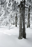 Winter hike Royalty Free Stock Image