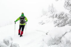 Winter hike in white woods, blizzard and snowing Royalty Free Stock Images
