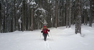 Winter hiker in snowy forest stock video footage