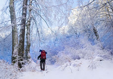 Winter hiking in the forest Stock Photo