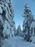 Winter hiking in romania. Winter hiking on between fir snowed trees stock photos