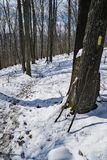 Winter Hiking Trail in the Blue Ridge Mountains Stock Photos