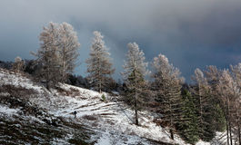 Winter hiking trail. Hiking trail in the mountains in winter Royalty Free Stock Photo