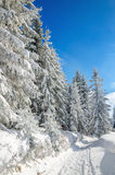 Winter hiking trail in mountains and forests, Stock Images