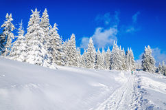 Winter hiking trail in mountains with snow Royalty Free Stock Image