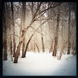 Winter hiking trail. Stock Images