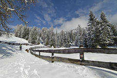 Winter Hiking trail, after a Snowfall Royalty Free Stock Images