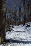 Winter Hiking Trail in Virginia Royalty Free Stock Photography