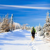 Winter hiking woman and dog Stock Images