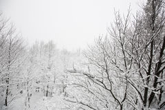 Winter hill with cross, fading in cloud, and snow covered plants Royalty Free Stock Images