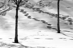 Winter on the hill royalty free stock image