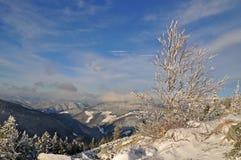 Winter on a hillside. Stock Photo