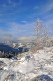 Winter on a hillside. Stock Images
