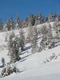 Winter Hillside. A tree-covered hillside after a fresh winter snowfall stock photos