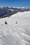 Winter on a hillside. Stock Image