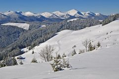 Winter on a hillside. Royalty Free Stock Photography