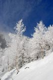Winter on a hillside Stock Photography