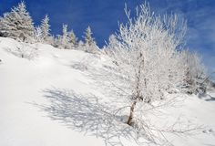 Winter on a hillside Royalty Free Stock Image